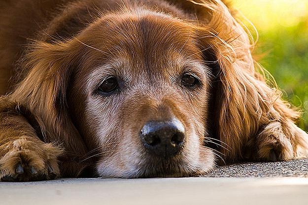PEMF TREATMENT FOR PETS