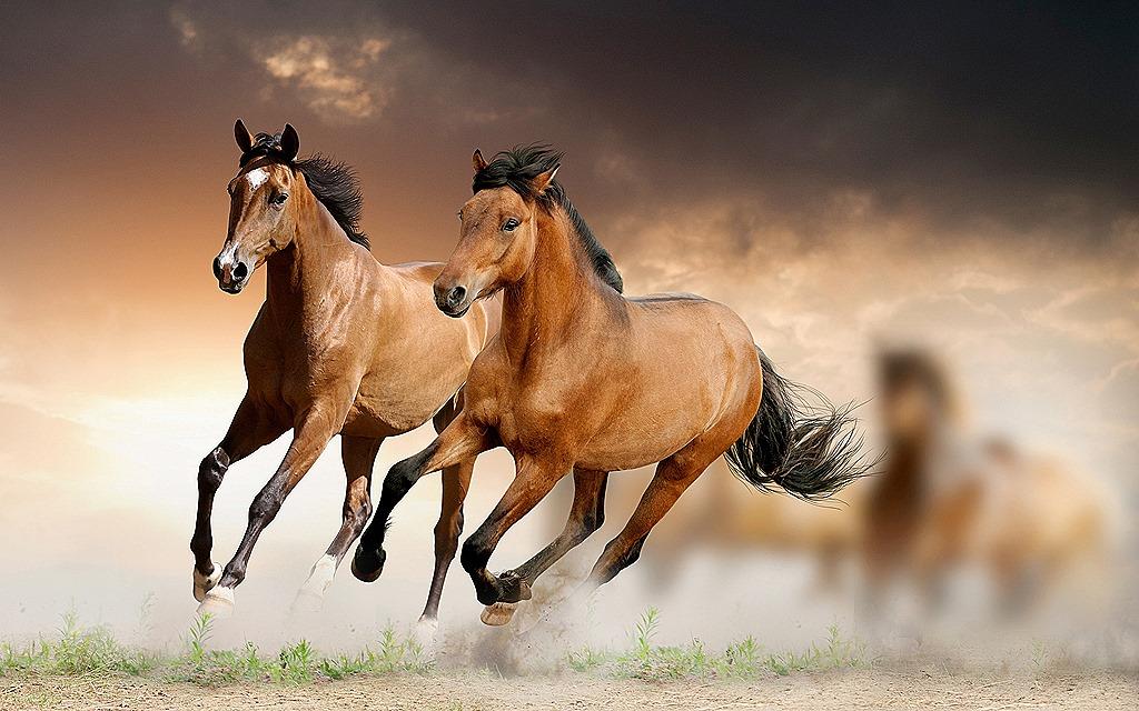 PEMF 8000 Equine Therapy Improves Circulation | PEMF REVIEW