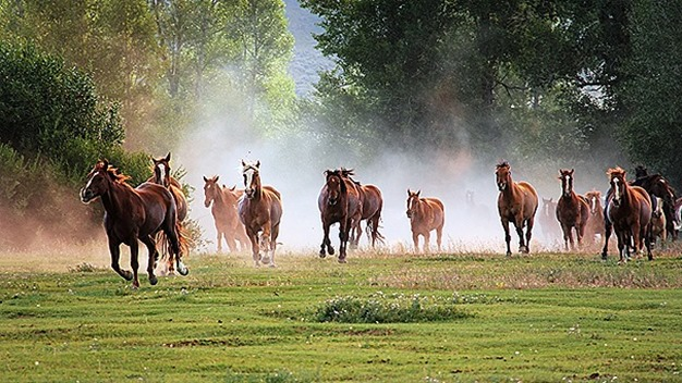 PEMF equine